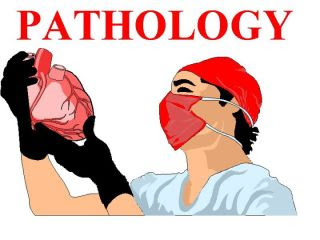 Protocol PhD in Pathology register